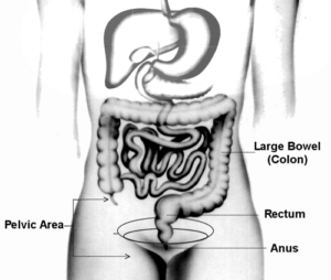 Lower GI Diagram